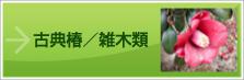 古典椿/雑木類