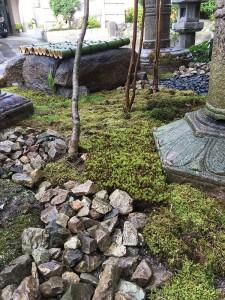 家の前庭3